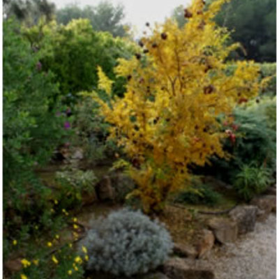 Presupuesto dise ar jard n consejos e inspiraci n for Disenar jardines online gratis