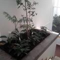 construccion de jardin interior