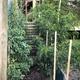 Micro Bosque Urbano - 6 meses