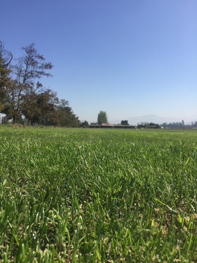 Campo pasto alfombra