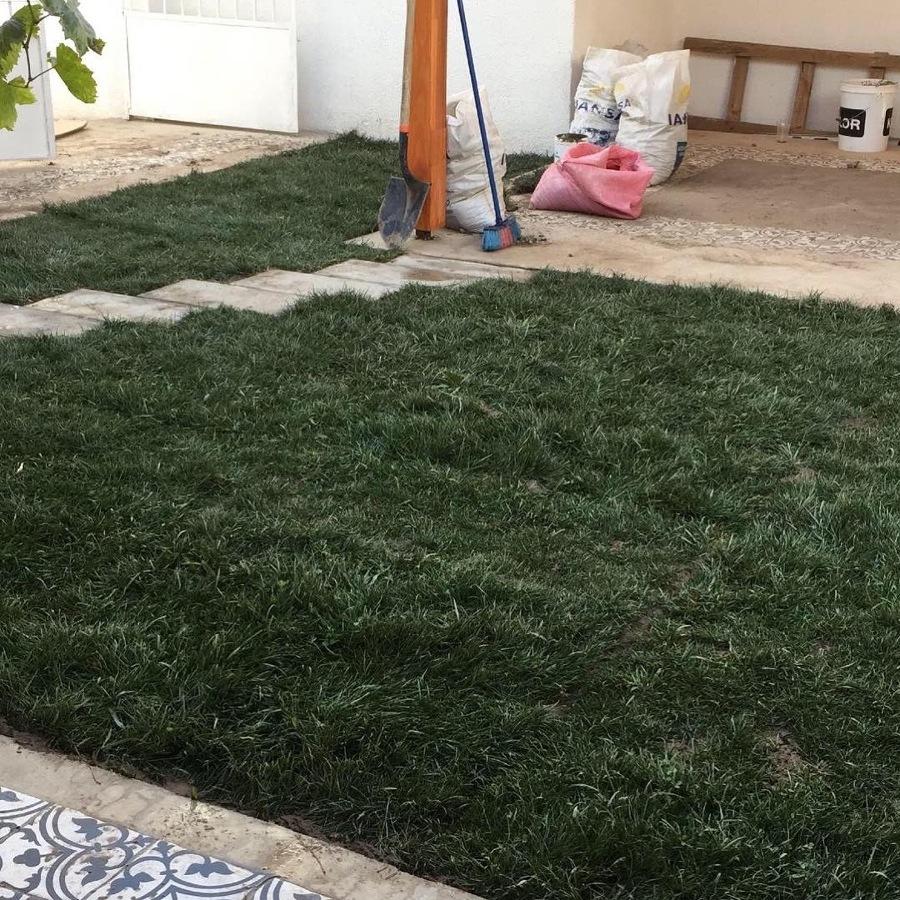 Pasto alfombra