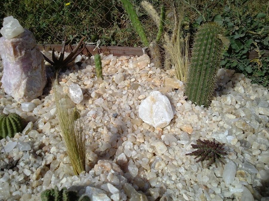 Foto cactario con cuarzo de el rincon del cuarzo 82775 for Cactario santiago