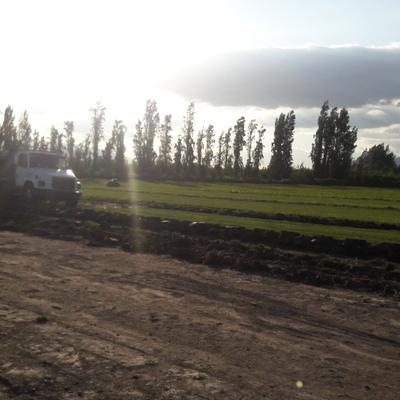 Productores de Pasto en Alfombra Natural