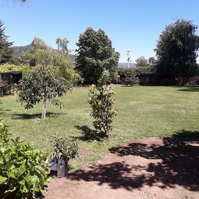 Jardin sin mantención(1)