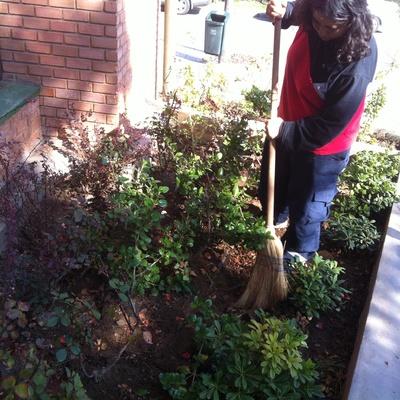 Limpieza plantas