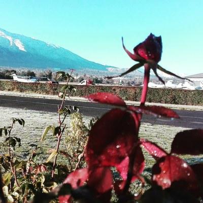 Mantención jardines Rosas