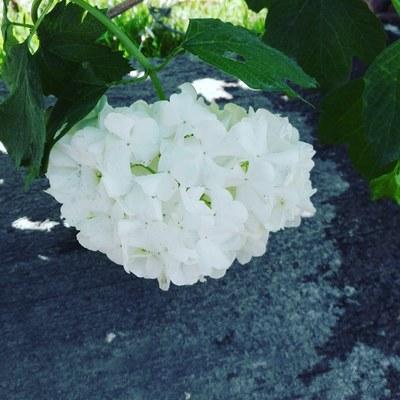 Mantención Jardines Gardenia