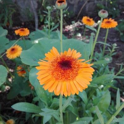 Mantención jardines