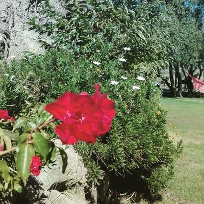 Mntención jardines