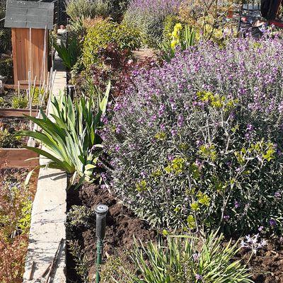 Jardin en su mayoria con herbaceas