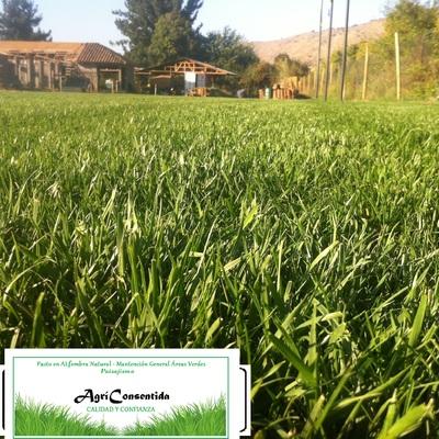 Mantención áreas verdes