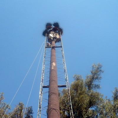 mantención de palmeras torres de celular, con colocación de andamios y cambios de hojas secas y ramas metalicas, colocación de anillos y radomos en otros casos