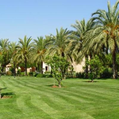 Mantencion Jardin