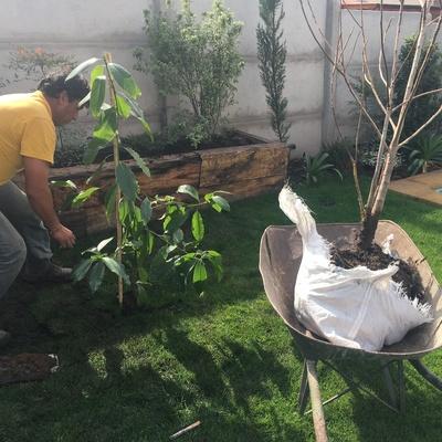 Plantacion de especies en jardines