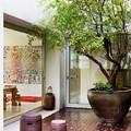 Patio interior con árbol