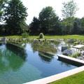 piscina ecológica con vegetación