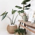 Plantas en hogar mindfulness