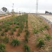 2018  Eje Cisternas Las Torres 3 Etapa. SERVIU/Constructora Nelson Castillo. Sub Contrato Construcción de Areas Verdes. La Serena-Coquimbo.