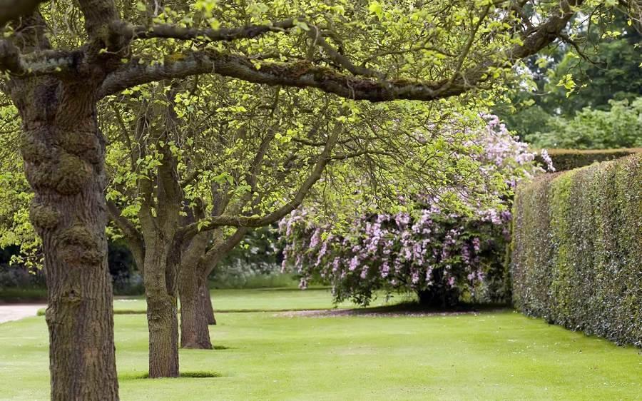 C mo preparar tu jard n para la primavera ideas jardineros for Arboles frondosos para jardin