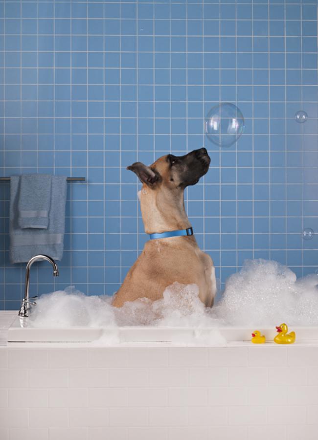 Bañera con mascota