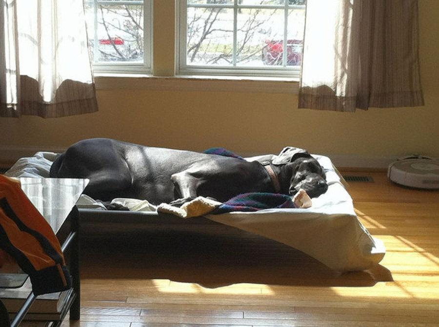 Cama para perro grande