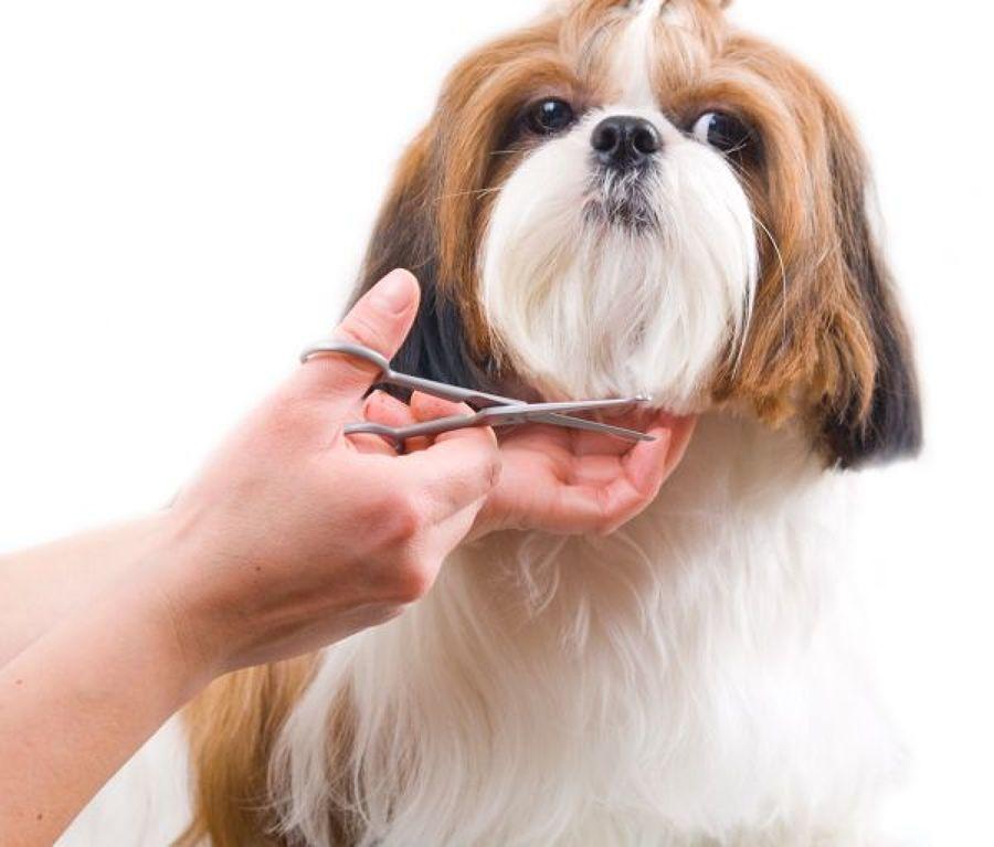 Cuidado pelo perro