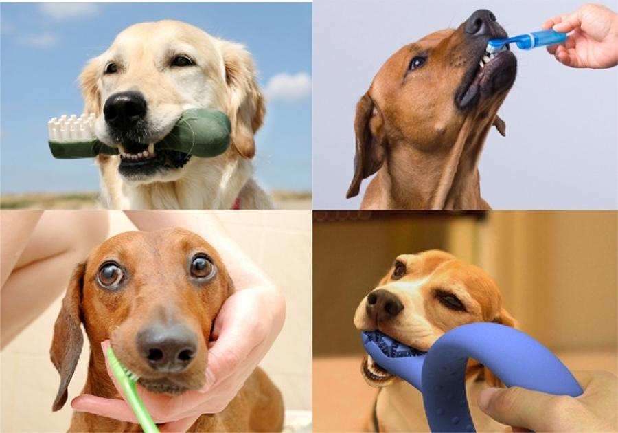 Higiene bucal mascota