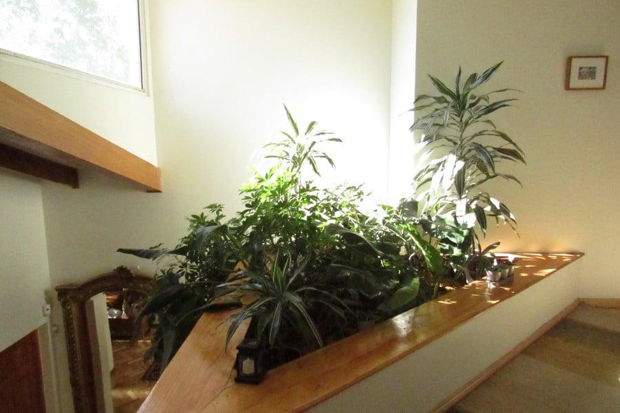 Jardinera interior hice un borde para el estanque con un for Jardinera de madera vertical
