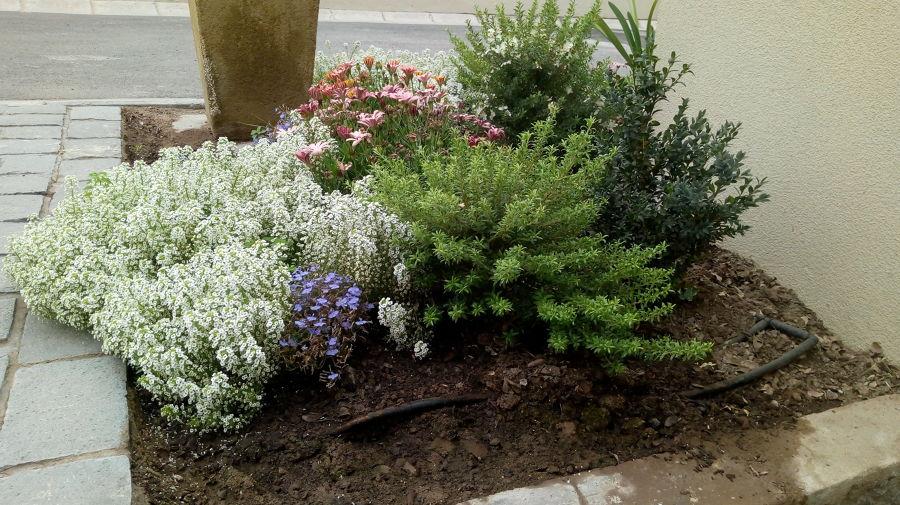 macizos de plantas