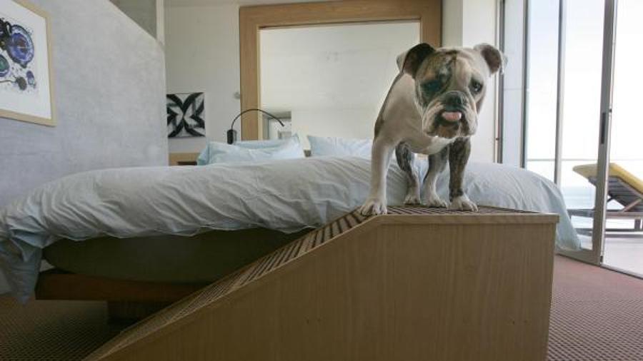 mascota en dormitorio
