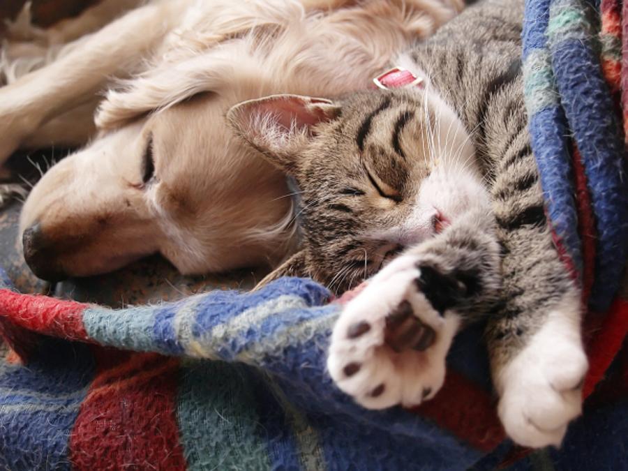 Mascotas sobre alfombra