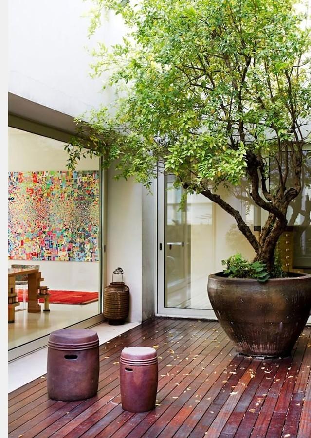 Foto patio interior con rbol 164701 habitissimo for Arbol interior