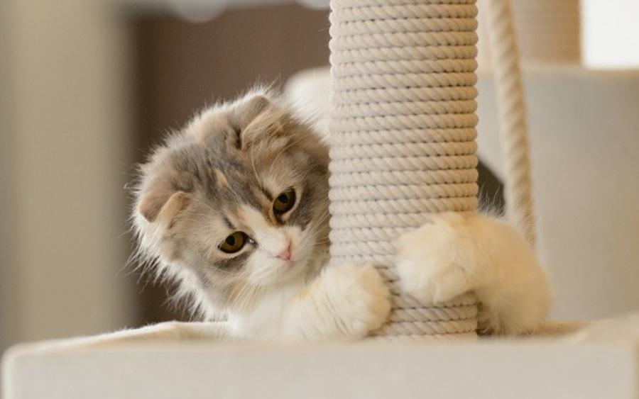 Rascador blanco gatos