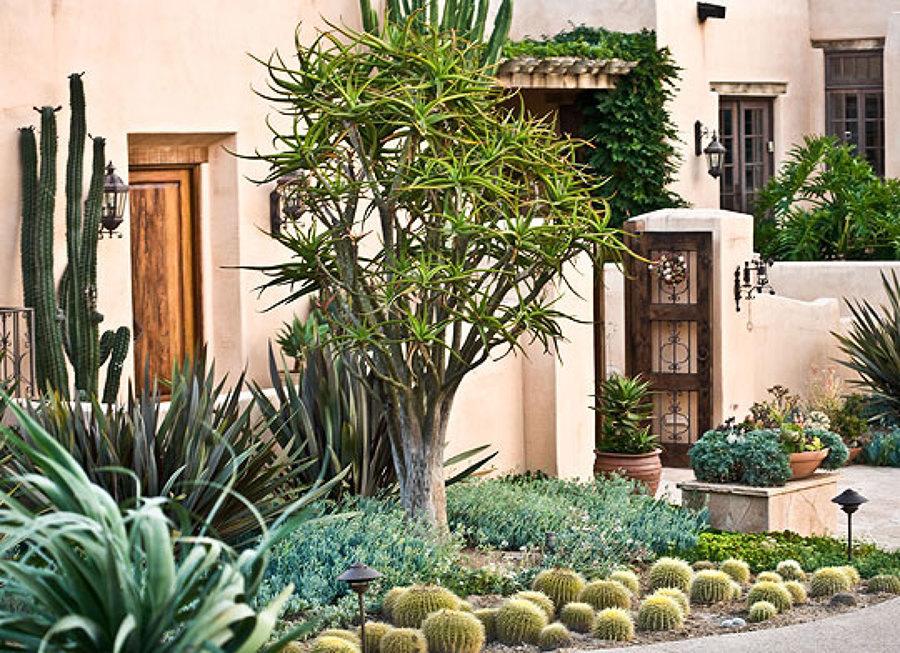Suculentas y agaves