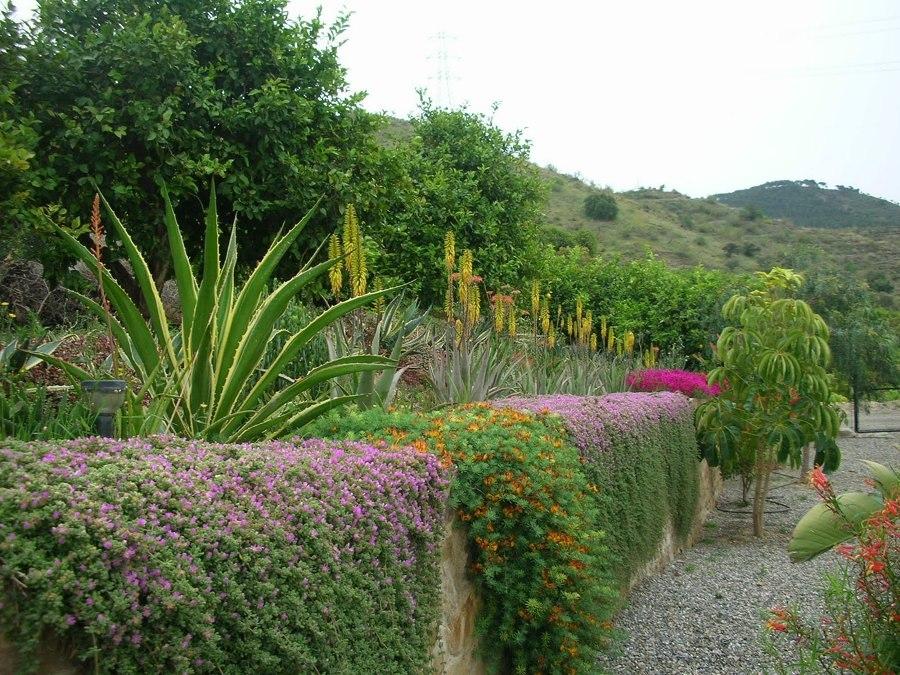 Foto plantas de secano 118175 habitissimo for Arbustos decorativos jardin