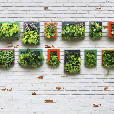 5 pasos para tener tu huerto urbano
