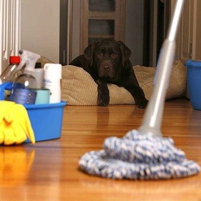 Cómo preparar tu casa para una nueva mascota