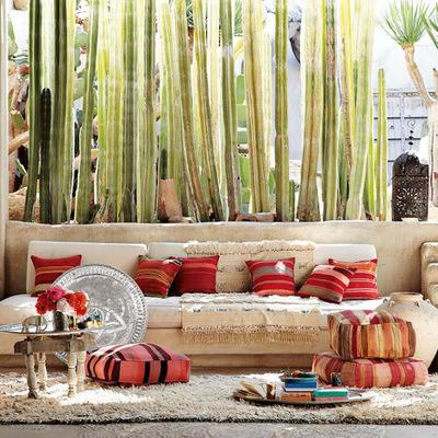 jardín con cactus