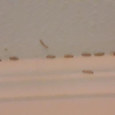 Eliminación larvas de polillas, arácnidos e insectos