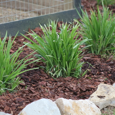Xerojardinería: jardines que no malgastan ni una sola gota