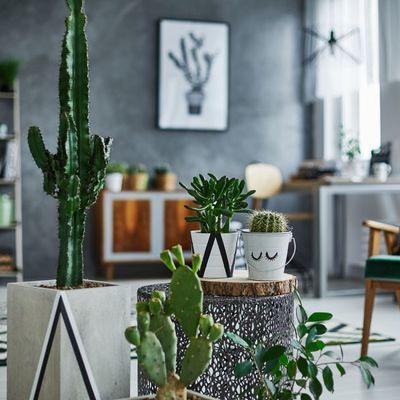 Nórdico 2020: cómo renovar el estilo decorativo favorito de muchos