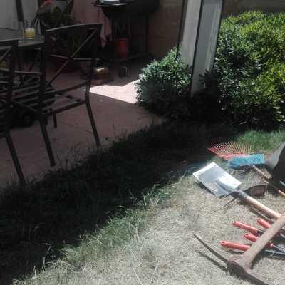 Corte y mantenimiento de arbustos