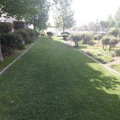 Trabajos de mantención en áreas verdes en condominio ubicado en Quilín