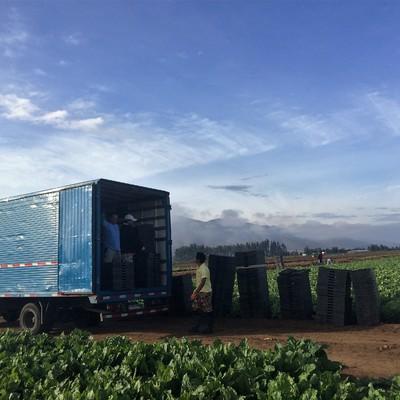 Transporte de carga agricola