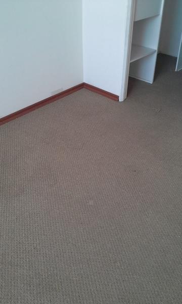 Foto limpieza de alfombra de mirda diaz 117355 habitissimo - Limpiador de alfombras ...