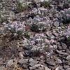 plantas que nacen en secano
