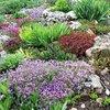 plantas coloridas