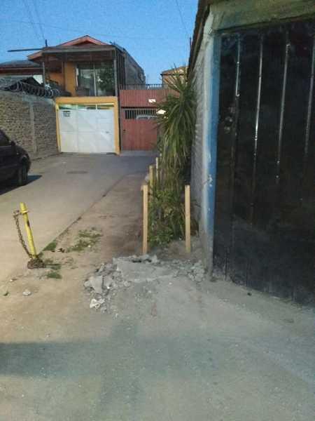 ¿Se puede plantar árboles al lado del muro perimetral?