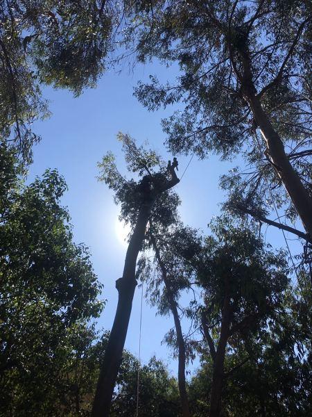 Donde certificarse como arborista en altura?
