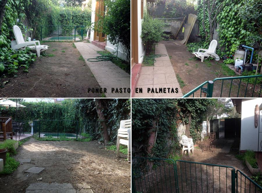 Arreglar jard n plantar pasto en palmetas y mantenci n for Arreglar jardin